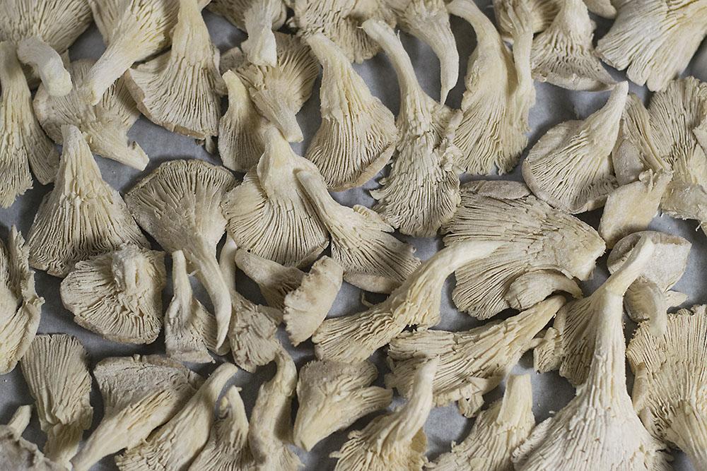 oyster mushroom chips